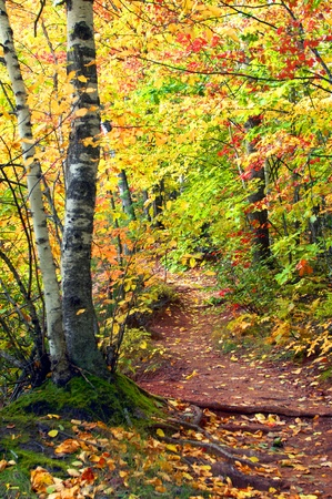 Winding narrow path leads to Hungarian Falls in the Keweenaw Peninsula of Michigan.  A tunnel of gold and yellow cover path. photo