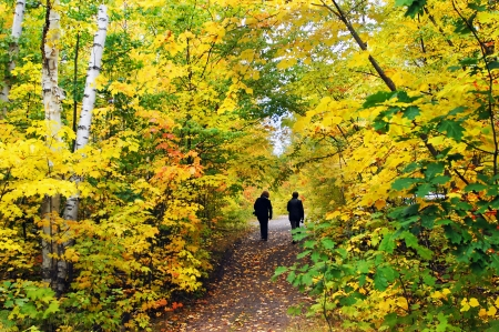Two women walk the Hungarian Falls Trail in Upper Peninsula, Michigan.  Yellow, Autumn leaves form tunnel over their heads as they hike.