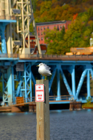 no swimming sign: Seagull seems to have his feathered ruffled over the No swimming sign and subsequent fine.  Portage Drawbridge sits in background.