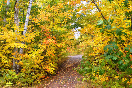 upper peninsula: Autumn leaves form yellow tunnel over the trail to Hungarian Falls in Upper Peninsula, Michigan. Stock Photo