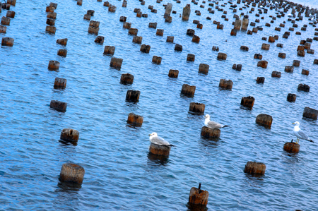 marquette: Remains of old loading dock on Lake Superior outside of Marquette, Michigan.  Seagulls rest on tops. Stock Photo