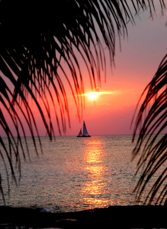 Sun sets over ocean in Cozumel, Mexico.  Palm fronds frame pink, setting sun and catamaran.