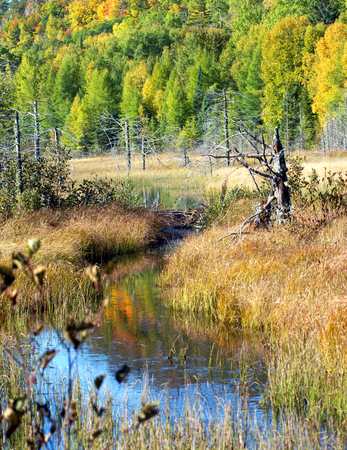 s curve: Summer turns to Autumn in Upper Peninsula, Michigan.  Brook twists into a bog complete with rotting trees and a beaver dam.  Fall color reflects in calm waters.