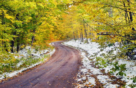 hardwoods: Narrow, dirt, one-lane road winds around the Michigan hardwoods above Houghton.  Road disappears under a tunnel of bright yellow leaves. Stock Photo