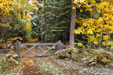 michigan snow: Rustic, wooden gate and fence bar the entrance to a small dirt lane in the woods of Upper Peninsula, Michigan.  Yellow leaves give way to winter as snow flakes fall.