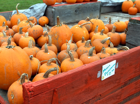 priced: Fresh picked pumpkins ride in a rustic, red, wooden wagon.  Priced to sale, pumpkins go for $2.00 for a medium pumpkin according to sign.
