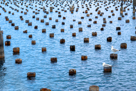 marquette: Endless dock pilings provide seagulls with many opportunities to rest in the blue waters of Lake Superior.