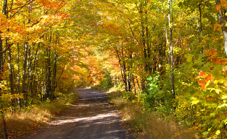 backroad: Dirt lane meaders through Autumn forest of gold, yellow and orange.  County road is in Upper Penninsula, Michigan. Stock Photo