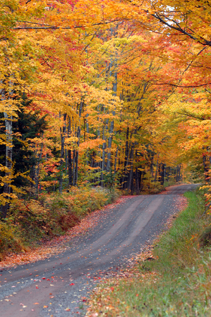 upper peninsula: Tunnel Road in Upper Peninsula, Michigan, is covered with golden leaves.  Fall foliage surrounds drivers as the road disappears into the distance. Stock Photo