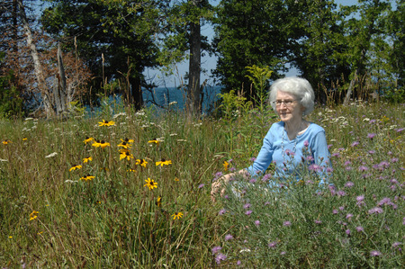 Elderly woman kneels amid the blooming wildflowers of Upper Pennisula Michigan.  She is wearing a bright blue shirt and has white hair.