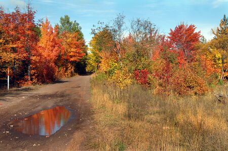 pot hole: Autumn reflects in mud hole of quiet dirt lane in Upper Penninsula, Michigan.  Trees are bursting with colorful orange, yellow and gold.
