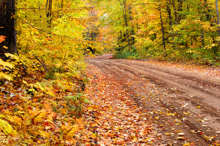 dank: Autumn colors this backroads, logging road into a canvas of color in Upper Penninsula, Michigan.  Dirt lane, S-curves, into the distance. Stock Photo