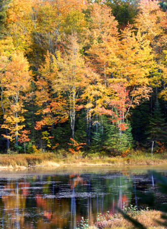 ornage: Colorful Upper Pennisula of Michigan reflects in the still and calm water of a quiet lake. Stock Photo