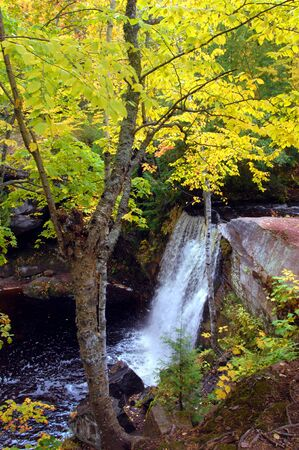 upper peninsula: Hungarian Falls is surrounded by yellow and gold leaves as Fall colors the Upper Peninsula of Michigan.