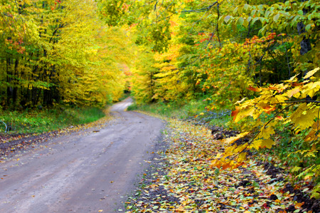 backroad: Quiet backroad of Upper Peninsula, Michigan winds into a tunnel of yellow leaves. Stock Photo