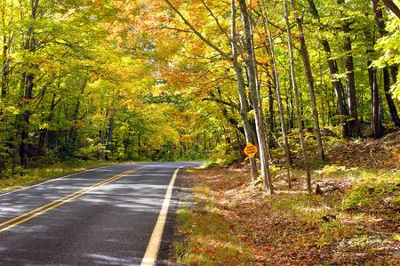 secluded: Sign on tree warns trucks entering highway.  Overhanging branches form a tunnel of gold and yellow on a secluded highway in Upper Penninsula, Michigan.