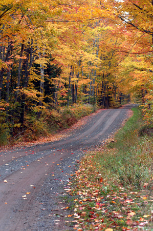 hardwoods: Tunnel Road above Houghton, Michigan dips and twists through hardwoods in the Upper Peninsula. Stock Photo