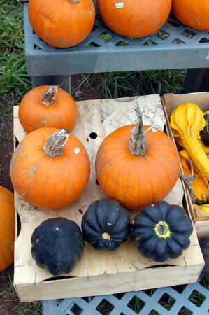 roadside stand: Farm fresh vegetables sit for sale at roadside Michigan vegetable stand.  Pumpkins, squash and guords sit on shelves on display. Stock Photo
