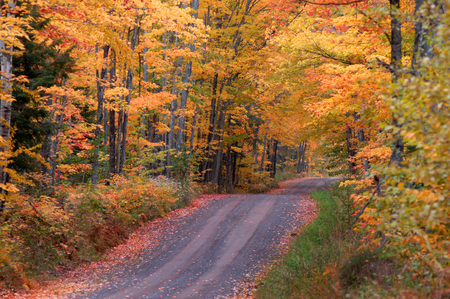 gold road: Tunnel Road above Houghton, Michigan dips and twists between hardwoods turning red, orange and gold as Autumn hits the Upper Peninsula.