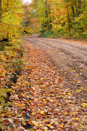 backroad: Backroad in Upper Peninsula Michigan is deserted and quiet on an Autumn day.  Dirt road is covered in leaves and surrounded by yellow foliage. Stock Photo