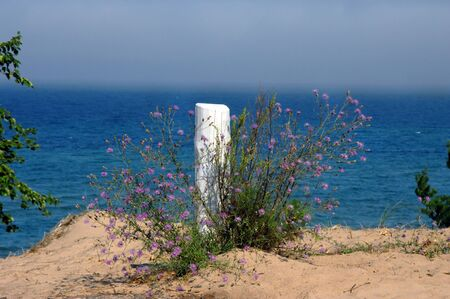 superiors: Wildflowers grow around rustic, wooden post on the shore of Lake Superior.  Fog clings to Lake Superiors surface.