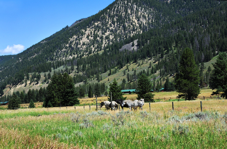 lodging: Dude ranch sits at base of Gallatin Mountains in Montana.  Cabin style lodging and horseback riding are available.  Horses stand near fence in meadow.