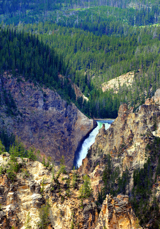 lower yellowstone falls: Majestic Lower Falls, in Yellowstone National Park, is framed by rugged rocks and jagged cliffs.  Evergreen forest fills the background.