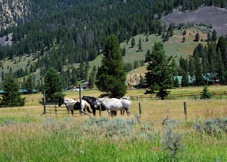 resides: Horses stand near fence with building in background.  Ranch resides in Gallatin Valley in Montana.
