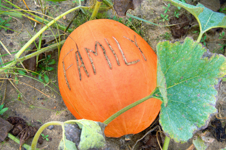 Pumpkin growing in a pumpkin patch has message scratched into the skin.  Message says one word family.  Maybe message relates to family activity of pumpkin picking.