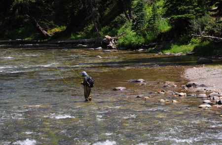 flyfishing: Man prepares line for flyfishing on the Gallatin River in Montana.  River is shallow.
