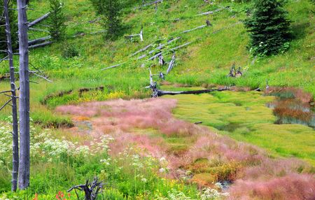 swampy: Swampy wetland in Yellowstone National Park has bare trees, fallen logs and wetland vegetation.