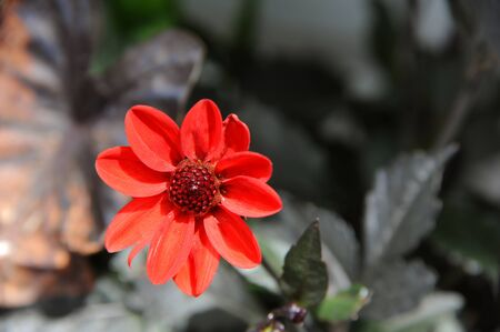 room for copy: Background image of a single orange flower.  Plenty of room for copy space. Stock Photo