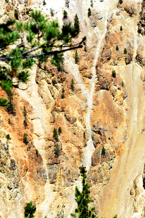 canyon walls: Tenacity is shown by the struggling, runted trees that cling to the canyon walls of the Grand Canyon of the Yellowstone.  Also Y is formed from erosion in side of canyon.