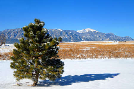 colorado rockies: Lone fir tree faces Pikes Peak outside Colorado Springs.  Snow covers ground and peaks. Stock Photo