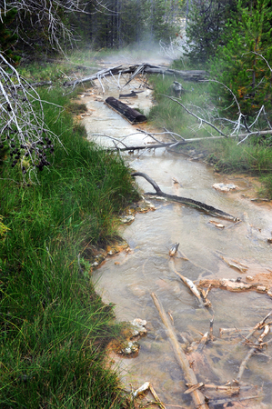 runoff: Hot spring runoff disappears into the distance in Yellowstone National Park.  Rotting and broken trees fill small stream and green grasses grow along bank.