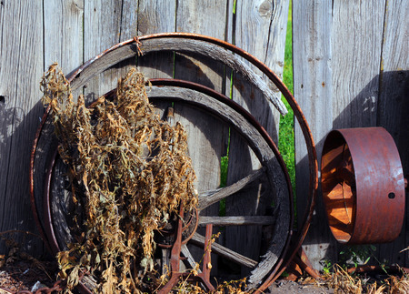 Metal and wooden wagon wheels lean against a rustic wooden wall.  Weeds grow up and over wooden hub.