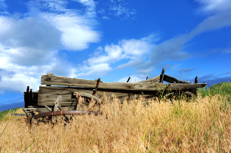 broken down: Full length image of a broken down, wooden, wagon.  It is sitting in a field surrounded and overgrown with weeds.  Blue sky overhead.