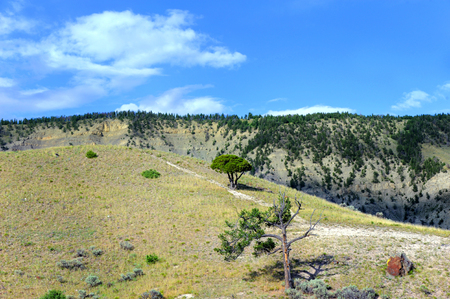 national scenic trail: Worn trail traverses to the top of a hill, with scenic overlook, in Yellowstone National Park.  Two lone trees grow on sparse hillside.