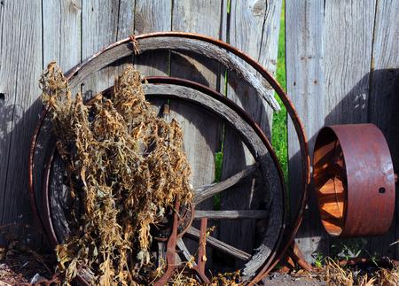 carreta madera: Metal y ruedas de carro de madera apoyarse en una pared de madera r�stica. Las malas hierbas crecen hacia arriba y sobre cubo de madera.