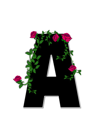 trellis: The letter A, in the alphabet set Rose Trellis, is black with white outline.  Roses and vines grow and spread around letter.