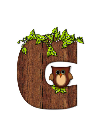 The letter C, in the alphabet set Woodsy Owl is filled with wood texture.  3D vines hang on letter.  Letter is decorated with a brown owl. Imagens