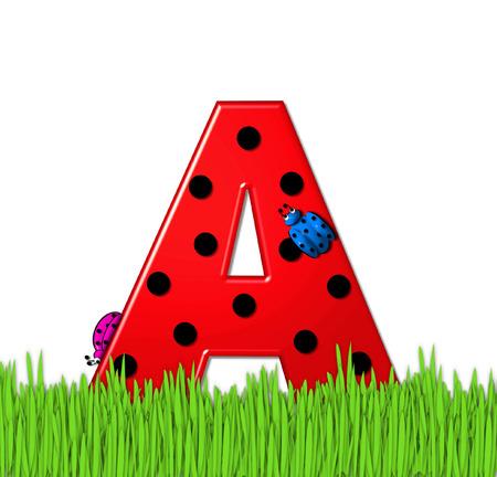 """mariquitas: El rojo de la letra A, en el conjunto de alfabeto de """"Lady Bug Red,"""" tiene grandes lunares negro y está decorado con mariquitas en 3D. Carta se encuentra en alto, hierba jardín. Foto de archivo"""