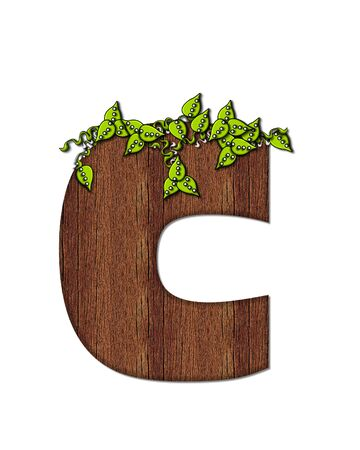 alphabet tree: The letter C, in the alphabet set Woodsy, is filled with wood grain and resembles a tree. Three dimensional vnes are spread across top of letter. Stock Photo