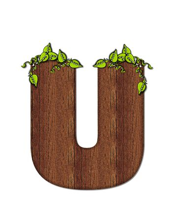 wood grain: The letter U, in the alphabet set Woodsy, is filled with wood grain and resembles a tree. Three dimensional vnes are spread across top of letter. Stock Photo