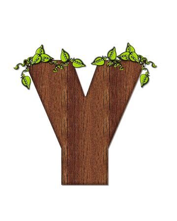 wood grain: The letter Y, in the alphabet set Woodsy, is filled with wood grain and resembles a tree. Three dimensional vnes are spread across top of letter.