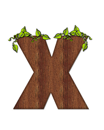 wood grain: The letter X, in the alphabet set Woodsy, is filled with wood grain and resembles a tree. Three dimensional vnes are spread across top of letter. Stock Photo