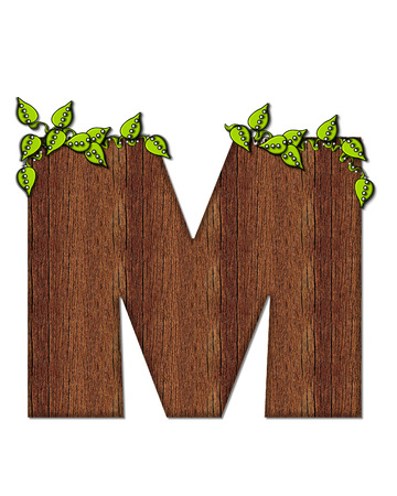 wood grain: The letter M, in the alphabet set Woodsy, is filled with wood grain and resembles a tree. Three dimensional vnes are spread across top of letter.