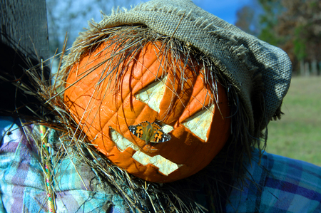 silvery: Closeup of Scarecrows face shows a Silvery Checkerspot moth sitting on scarecrows pumpkin carved head. Stock Photo