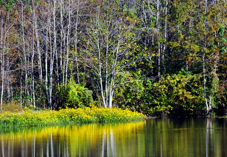 swampy: North Louisiana slough shows beauty in its wildflowers which are reflected in the still surface of the water.