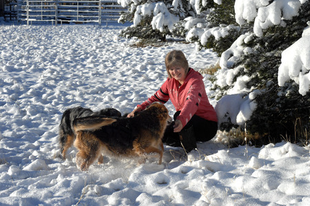 frolicking: Mature woman holds her arms out to greet her three Australian Shepherds.  It is winter and the ground is covered in snow.